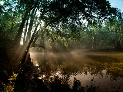 Morning light on a steamy morning on the Santa Fe River. Photo: Jill Heinerth