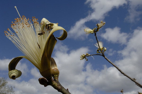 Pollinating bees bring life to exotic species taking root in Florida.